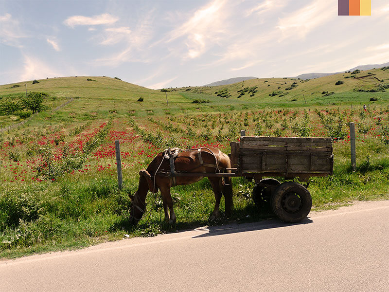 A horse and cart on the side of a road during during a cycling holiday in Albania
