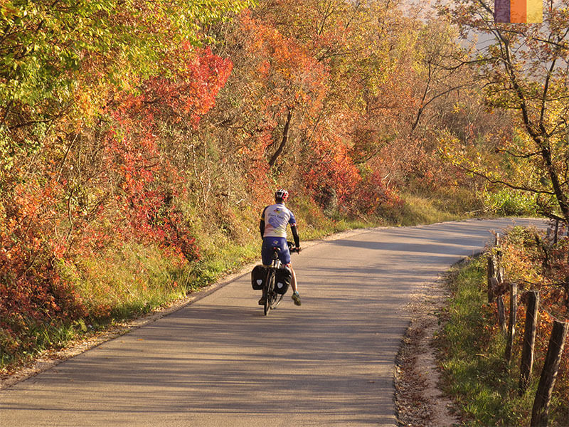 A lone cyclist on a path surrounded by trees and leaves