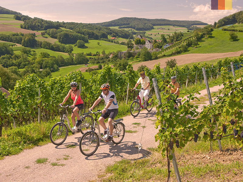 Four cyclists riding through vineyards in Tuscany, Italy