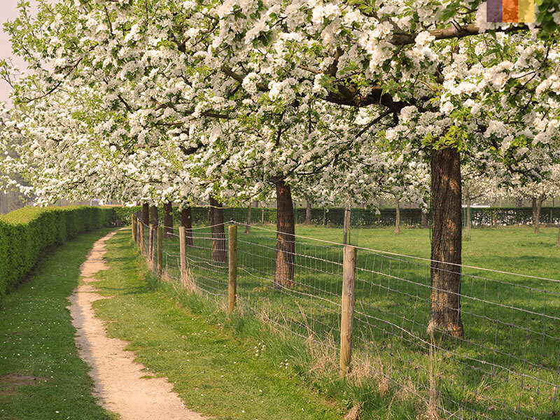 A cycling path running through an orchard on a Holland cycling holiday