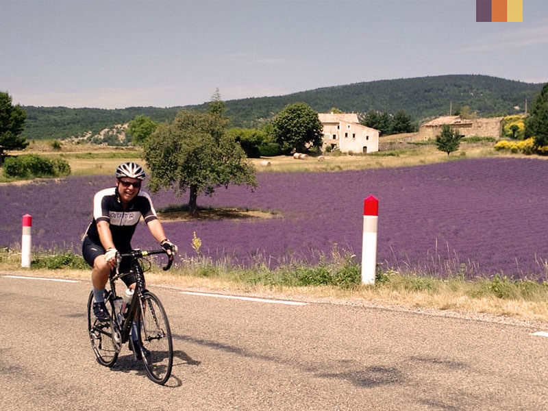 Cyclist riding through lavender fields on a cycling holiday in Provence