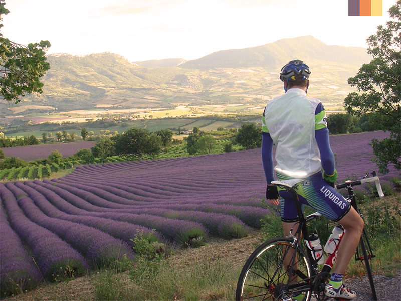 A cyclist stopped at the side of the road gazing over lavender fields in Provence on a cycling holiday
