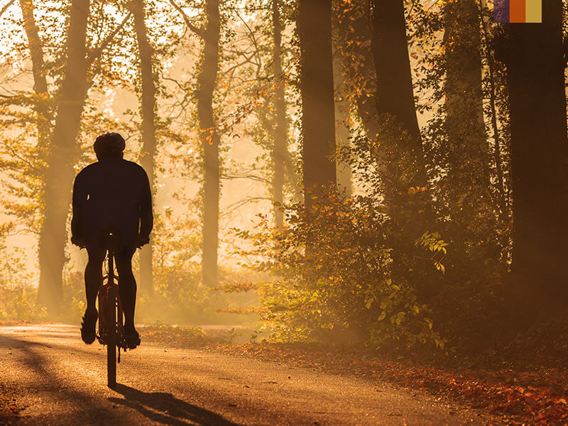 cyclist riding through a forest in Holland
