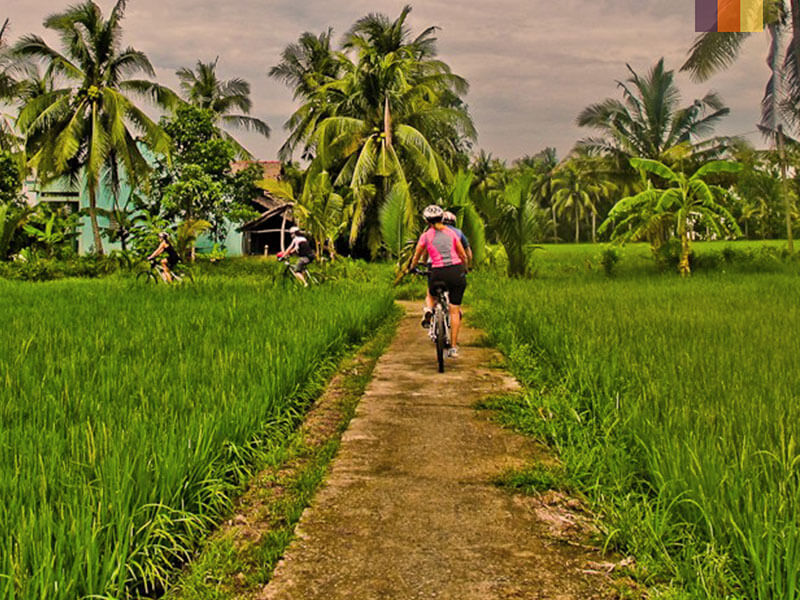 Two cyclist riding through a paddy field in central Thailand