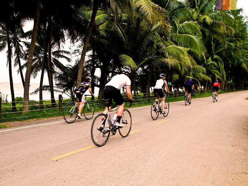 A group of road cyclists riding past palm trees next to the beach in Phuket