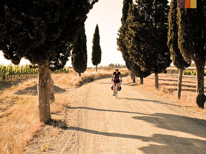 A lone cyclist riding through cypress trees in Tuscany Italy