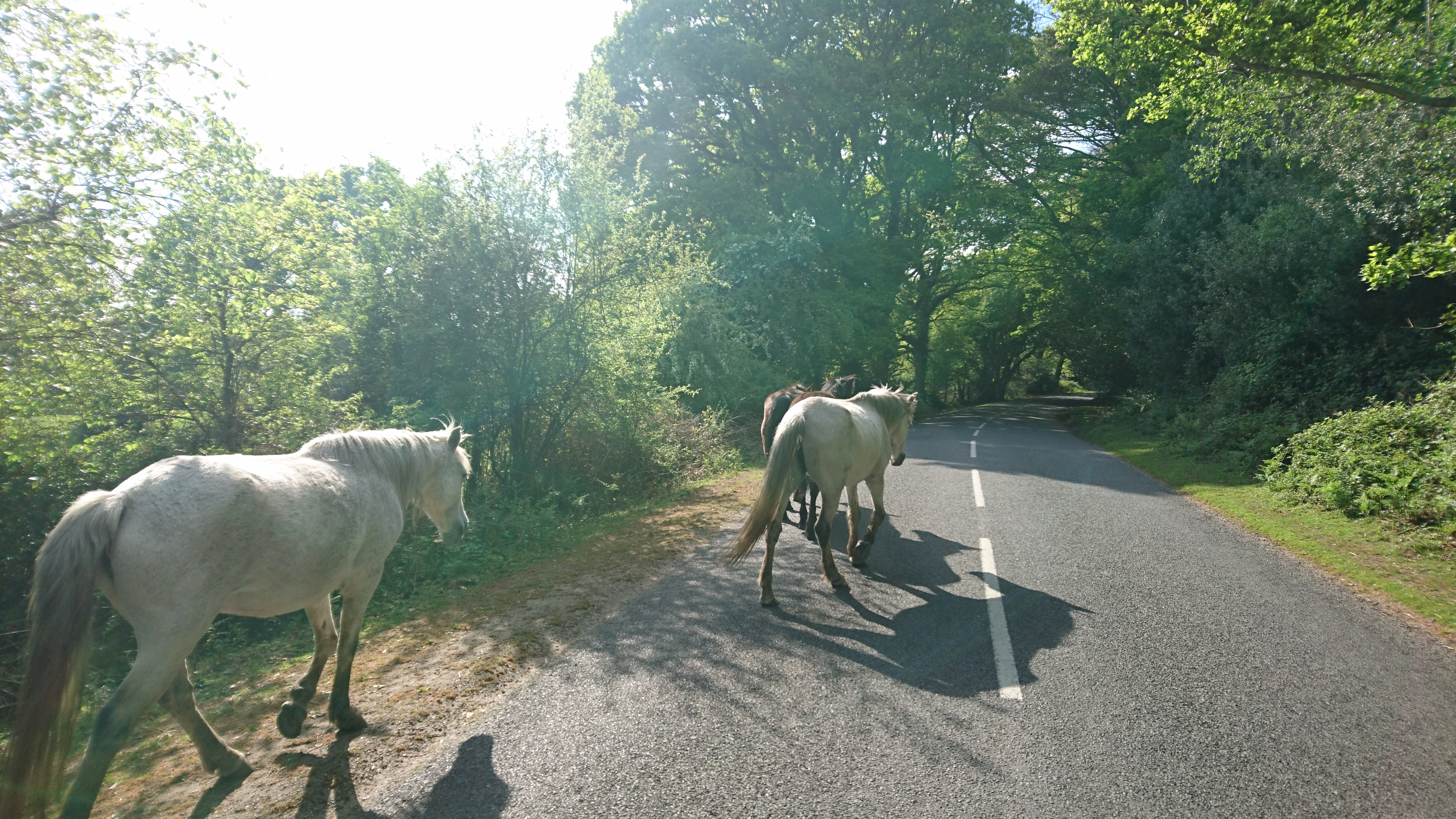 Cycling in the New Forest
