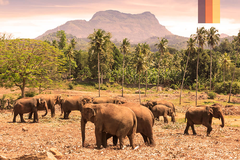 Elephants with a backdrop of luscious mountains and trees