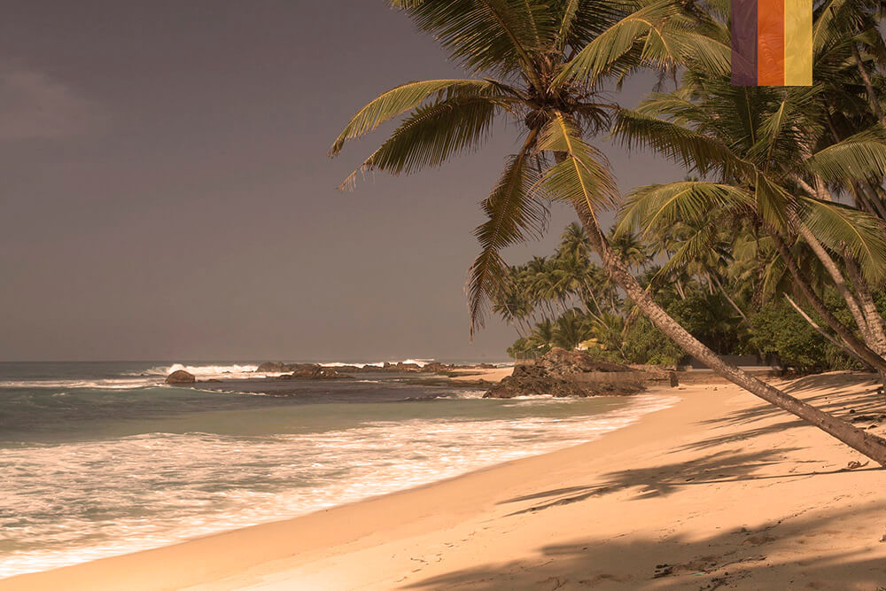 A in Sri Lankan sandy beach with palm trees