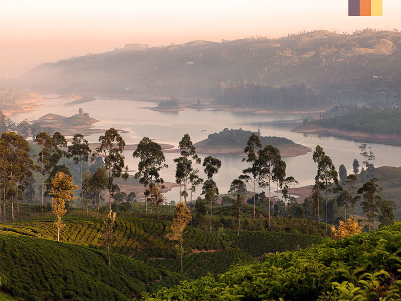 A beautiful view of Sri Lanka with tea fields, mountains, a lake and trees