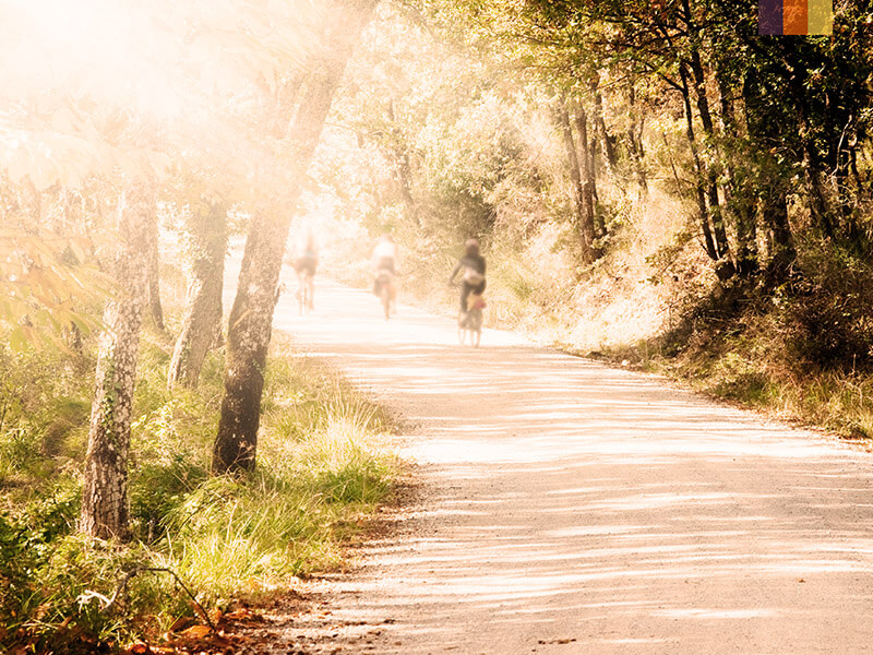 A path with cyclists covered by tress with beaming sunlight